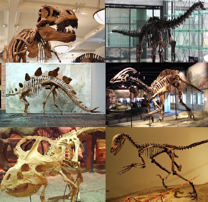 Various_dinosaurs.png